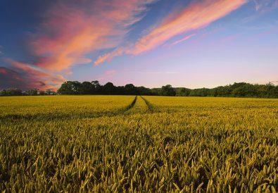 settore agricolo in italia
