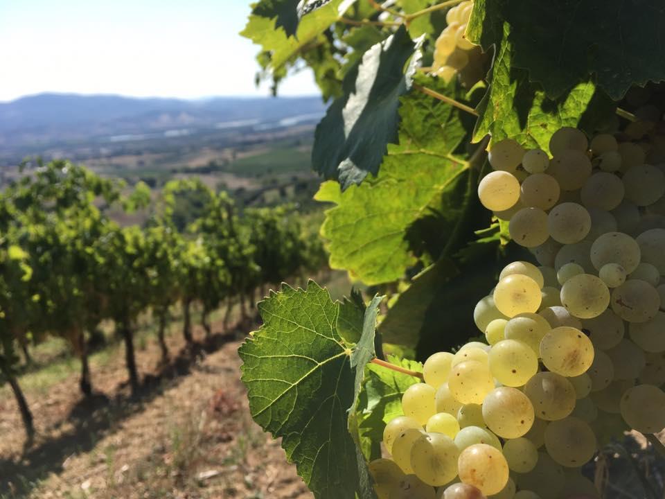 trebotti vino sostenibile