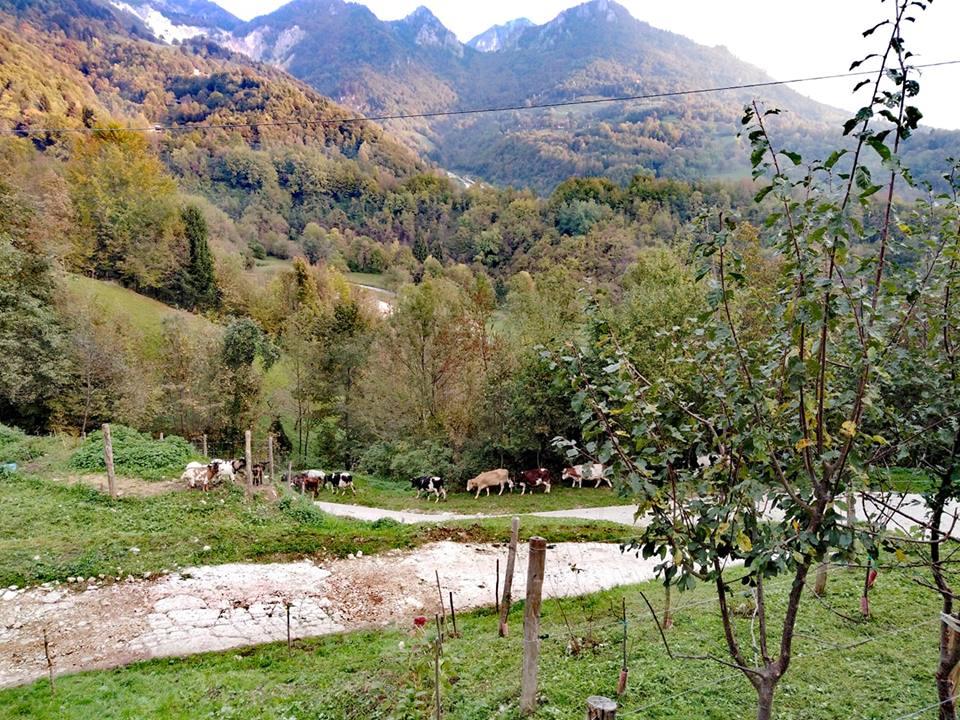 azienda agricola turcato