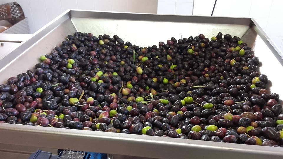 azienda lorese uva