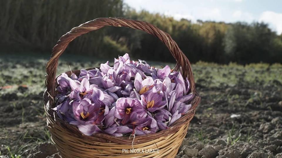 zafferano del re fiori