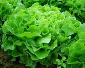 Gli ortaggi dell'Azienda Agricola Agrifoppa
