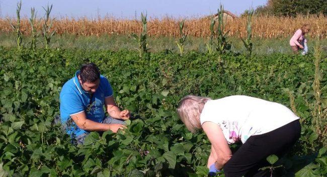 Azienda Agricola AgrifoppaLa spesa direttamente in campo
