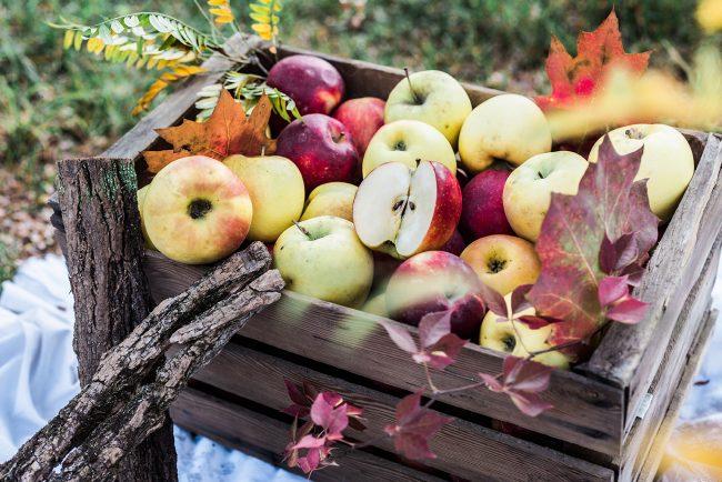 Le mele dell' Azienda Agricola La Soleggiata