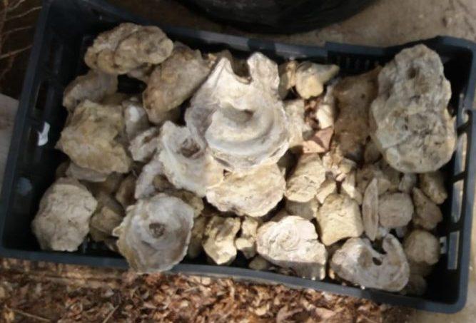 Azienda Agricola Biologica Papagni Roberta conchiglie fossili