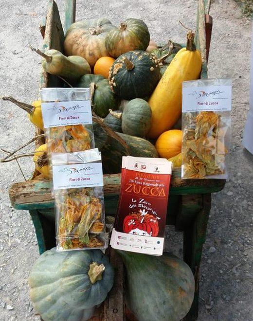 Azienda Agricola Biologica Papagni Roberta Zucche e fiori di zucca