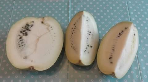 Azienda Agricola Le Sinergie La cocomera bianca
