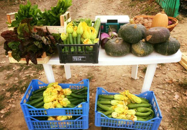 Gli ortaggi di stagione di Al Chiar di Luma