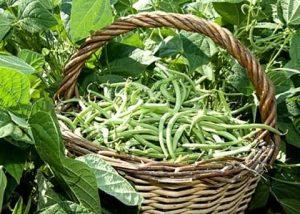 La verdura dell'Azienda Agricola Agrifoppa