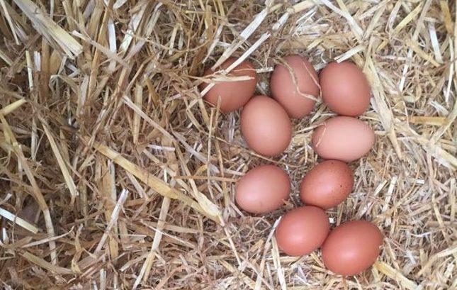 Le uova di Al Chiar di Luma