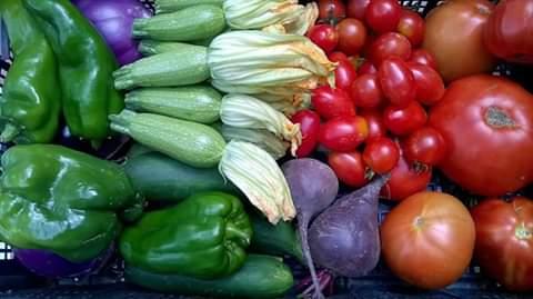Alcuni ortaggi dell'Azienda Agricola Le Cascate