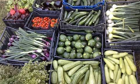 Gli ortaggi dell'Azienda Agricola Le Cascate