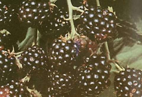 I frutti dell'Agriturismo La Sereta