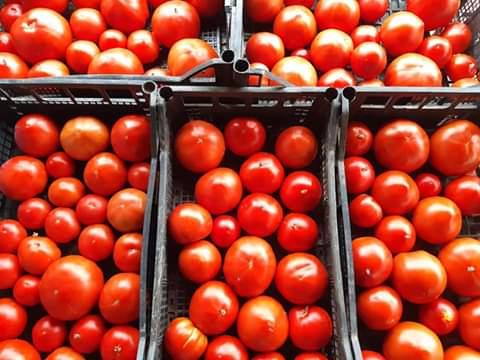 I pomodori de Le Cascate