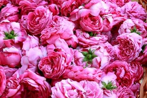 Le rose dell'Agriturismo La Sereta