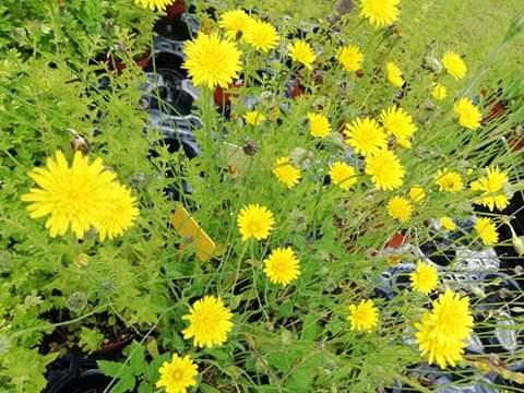 Azienda Agricola La margherita Piante e fiori ad uso alimentare