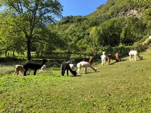 La Casa del Pastore Gli animali liberi all'aria aperta