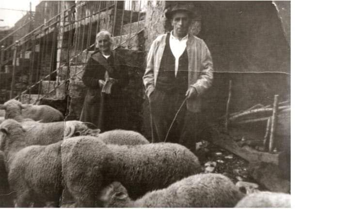 La Preta Tarantini Il nonno del Signor Carmine con il bestiame