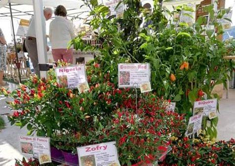 Solo alcune delle piante dell'Azienda Agricola La Margherita