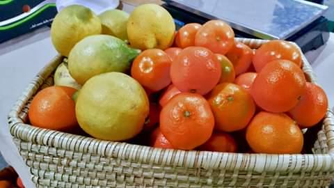 Alcuni degli agrumi di Sos Rosarno