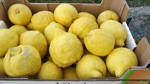 I limoni di Sos Rosarno