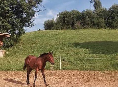 Al vecchio castagno I cavalli
