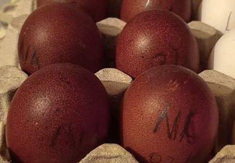 Al vecchio castagno Le uova scure delle galline Maras