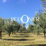 Pedonier