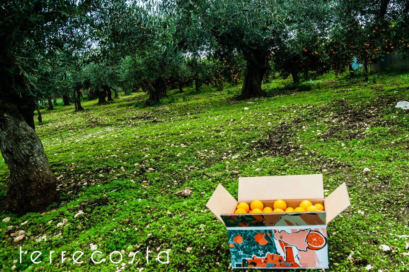prodotti agricoli siciliani