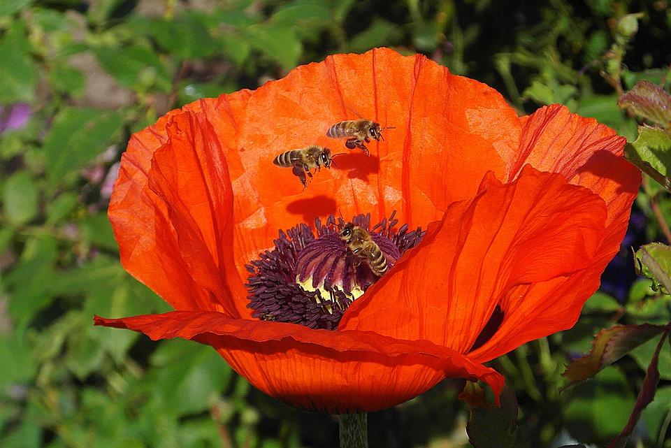 api e impollinatori